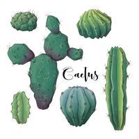 Kaktus im Wüstenvektor und in der Illustration, Hand gezeichnete Art, lokalisiert auf weißem Hintergrund.