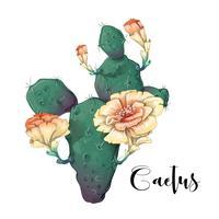 Kaktus i öken vektor och illustration, handritad stil, isolerad på vit bakgrund.
