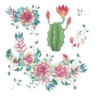 Suckulenter. Kaktus handritad på en vit bakgrund. Blommor i öknen. Vektor teckning suckulenter