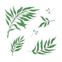 Heller Satz grüne tropische Blätter. Vektor