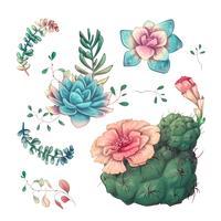 Sukkulenten Kakteenhand gezeichnet auf einen weißen Hintergrund. Blumen in der Wüste. Vektorzeichnung Succulents