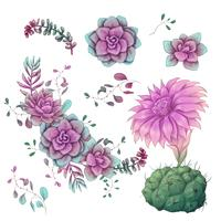 Sukkulenten Kakteenhand gezeichnet auf einen weißen Hintergrund. Blumen in der Wüste. Vektorzeichnung Succulents vektor