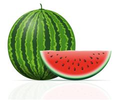 vattenmelon mogen saftig vektor illustration