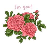 Satz der korallenroten Rosen Handzeichnung