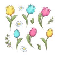 Sätt blommor tulpaner. Handritning Vektor illustration