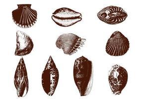 Geätzte Shell-Vektoren Pack
