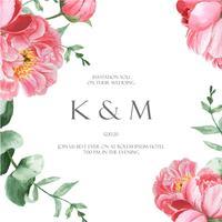 Pink Peony blommande blomma botaniska akvarell bröllopskort blommiga aquarelle isolerad på vit bakgrund. Design inbjudningskort, spara datumet, bröllopsinbjudan firar äktenskap illustration vektor