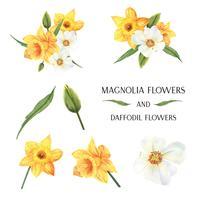 gul Magnolia och påsklilja blommor buketter botaniska florals llustration vattenfärg isolerad vektor