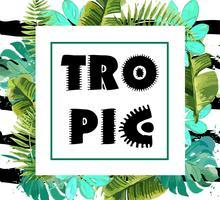 Exotischer Hintergrund mit tropischen Blättern. vektor