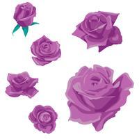 Blommor rosor, knoppar och gröna blad. Roses Set collection. rosikon och symbol vektor
