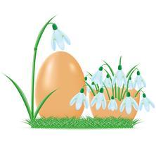 Schneeglöckchen sind in der Eierschalenvektorillustration