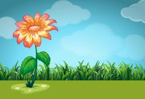 Scen med orange blomma i fältet vektor