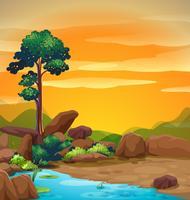 Scen med träd och damm vid solnedgången