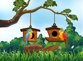 Gartenszene mit zwei Papageien