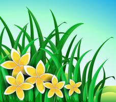 Ein Garten mit großen gelben Blüten vektor