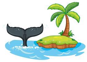 Buckelwalschwanz nahe bei der Insel