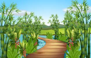 Natur scen med bambu längs bron