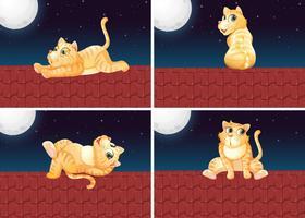 Set med katt på taket