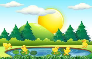 Fünf kleine Enten im Teich