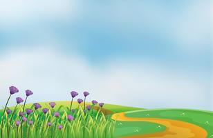 En trädgård med violetta blommor på toppen av kullarna