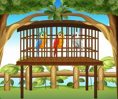 Macawpapageien im hölzernen Käfig