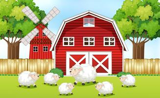 Schafe auf dem Bauernhof mit roten Scheunen