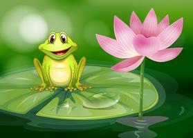 Ein Frosch neben der rosafarbenen Blume am Teich