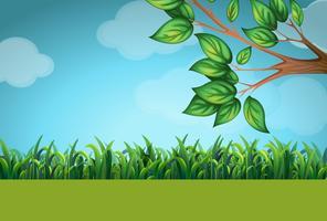Scen med gräs och träd vektor