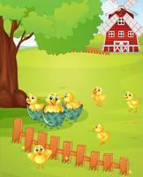 Lilla kycklingar på gården
