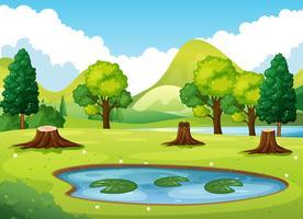 Skogsplats med liten damm