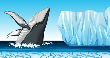 Ein Wal in der Antarktis