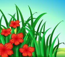 Ein Garten mit roten Blumen
