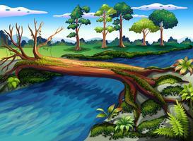 Ein Baum mit Algen am Fluss