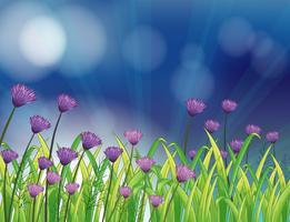 En trädgård med färska violettblommor