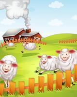 Schafe auf der Farm vektor