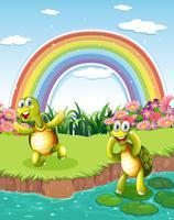Zwei verspielte Schildkröten am Teich mit einem Regenbogen im Himmel