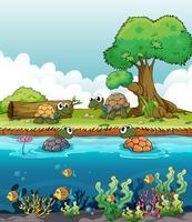 Ein Fluss und eine lächelnde Schildkröte vektor