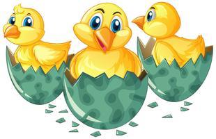 Drei kleine Küken, die Eier ausbrüten