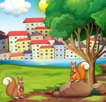 Zwei Eichhörnchen am Flussufer gegenüber dem Dorf vektor