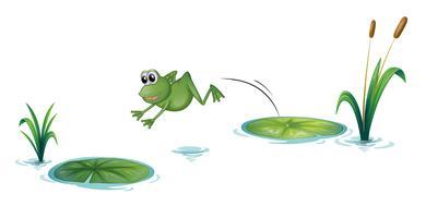 Ein springender Frosch