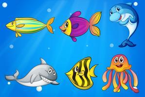Sechs bunte lächelnde Fische unter dem Meer
