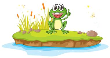 ein Frosch und Wasser