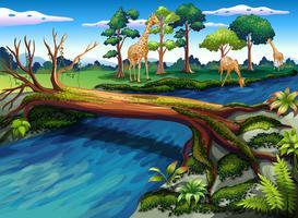 En flödande flod i skogen