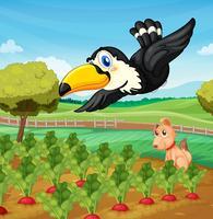 Tukan über Bauernhof vektor