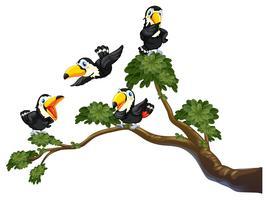 Toucan och träd vektor