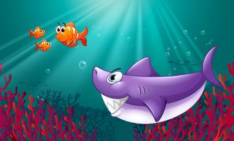 Ein großer Hai und drei Nemos unter dem Meer