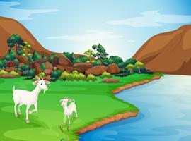Zwei Ziegen am Flussufer vektor
