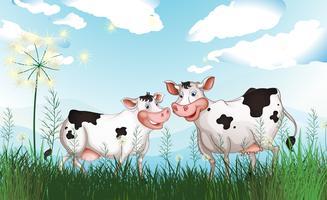 Två kor på gräsmarken vektor