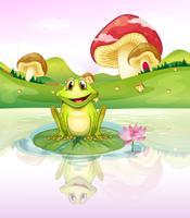Ein Frosch beobachtet sein Spiegelbild vom Wasser aus