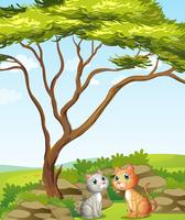 Två katter i skogen vektor